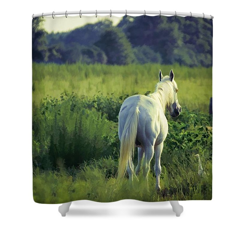 Animals Shower Curtain featuring the photograph The Old Grey Mare by Jan Amiss Photography