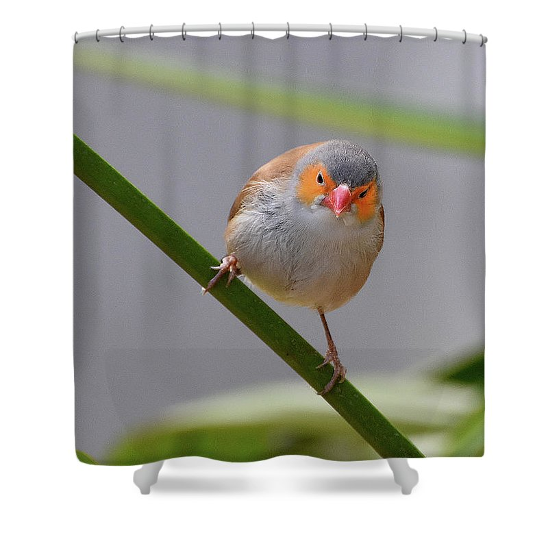 Ann Keisling Shower Curtain featuring the photograph The Orange Mask by Ann Keisling
