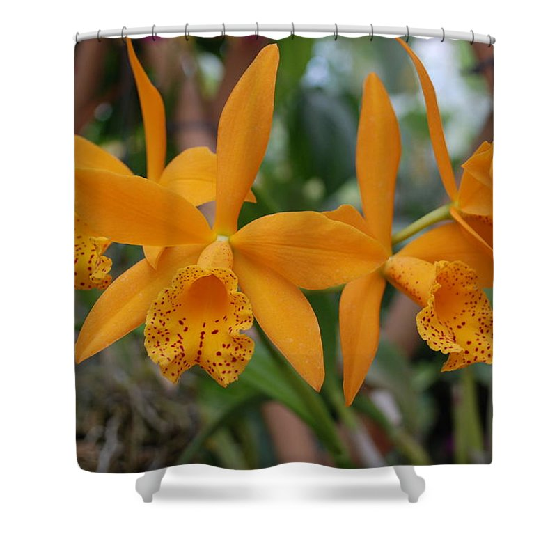 Macro Shower Curtain featuring the photograph The Orange Orchids by Rob Hans