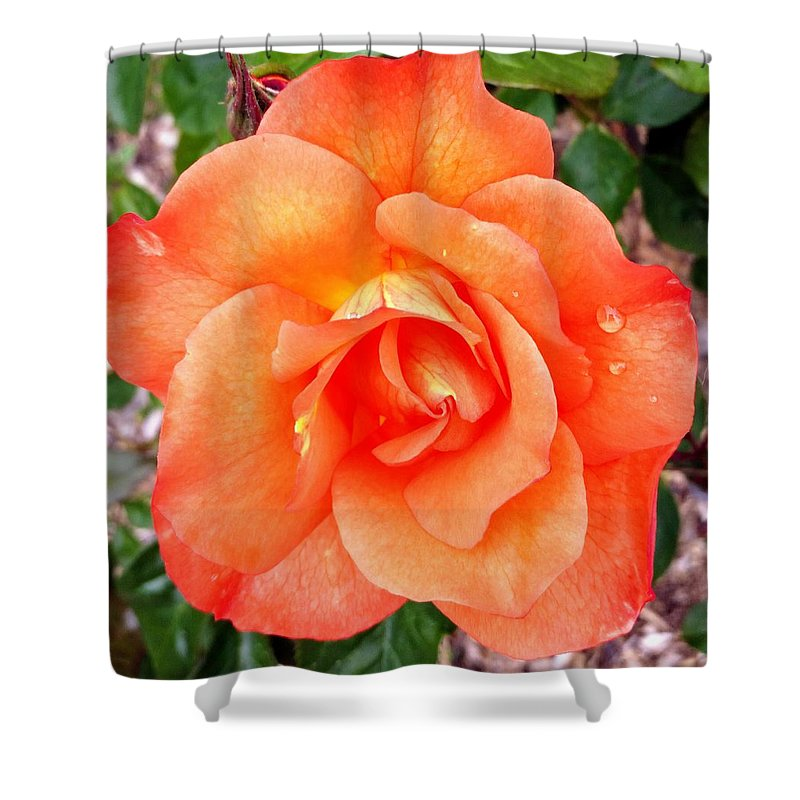 Flowers Shower Curtain featuring the photograph The peaceful place 9 by Valerie Josi