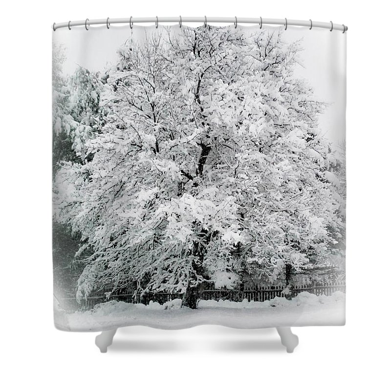 Tree Shower Curtain featuring the photograph The Pear Tree by Heather Hubbard
