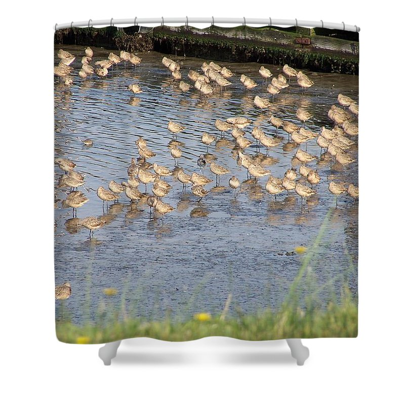 Seabirds Shower Curtain featuring the photograph The Plovers by Laurie Kidd