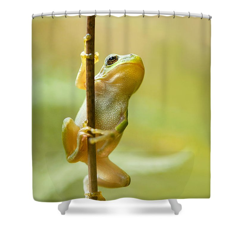 Amphibian Shower Curtain Featuring The Photograph Pole Dancer