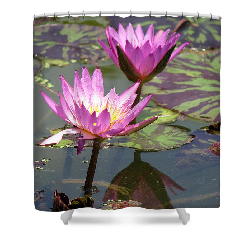 Lillypad Shower Curtain featuring the photograph The Pond by Amanda Barcon