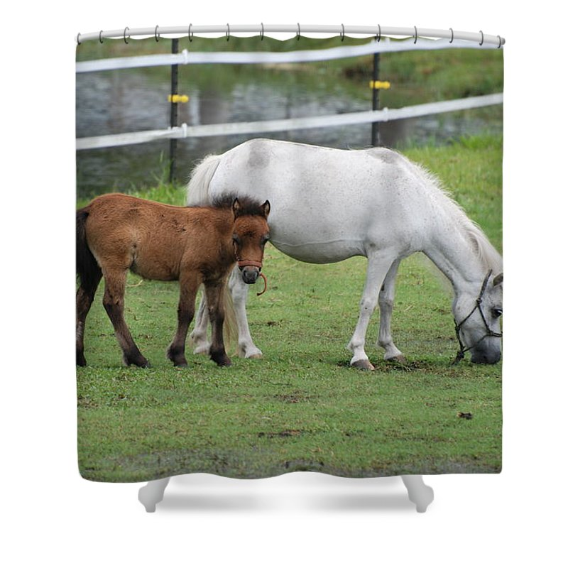 Horse Shower Curtain featuring the photograph The Ponys by Rob Hans