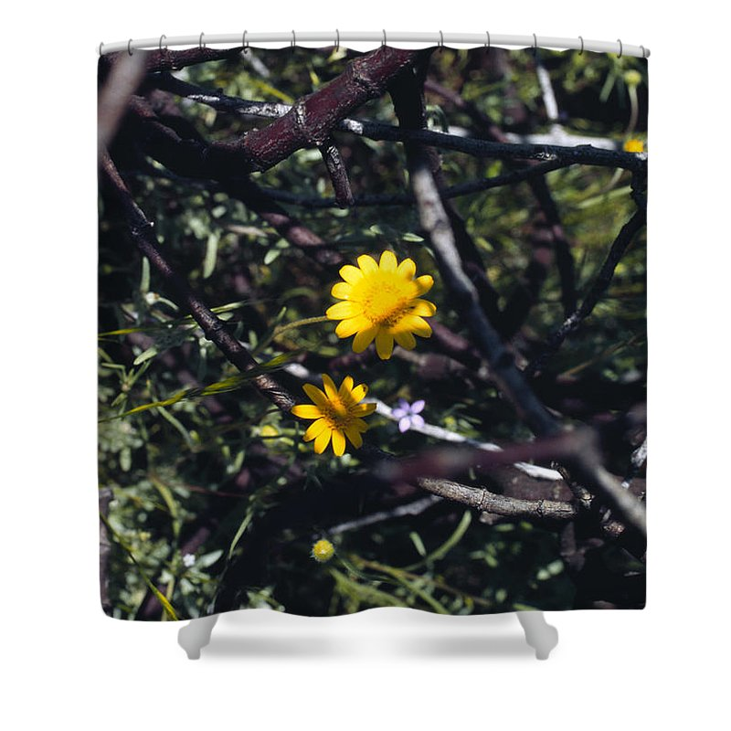 Flower Shower Curtain featuring the photograph The Prisoner by Randy Oberg