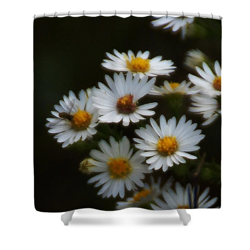Aster Shower Curtain featuring the photograph The Promise Of Fall by Linda Shafer