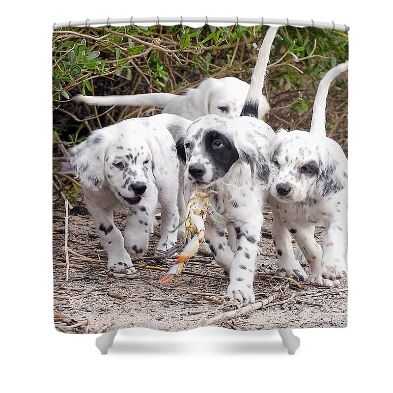 English Setter Shower Curtain featuring the photograph The Puppy's Prize by Scott Hansen