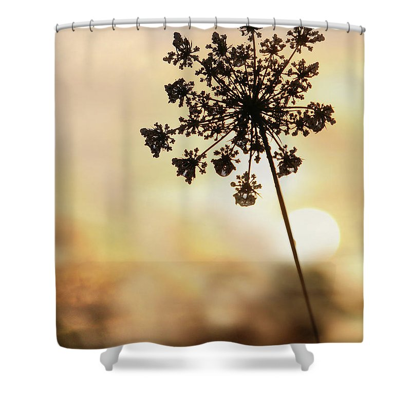 Flower Shower Curtain featuring the photograph The Queen At Sunrise by Lori Deiter