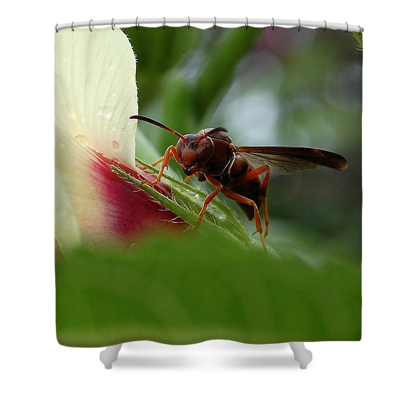 Wasp Shower Curtain featuring the photograph The Real Gardener by Robert Meanor