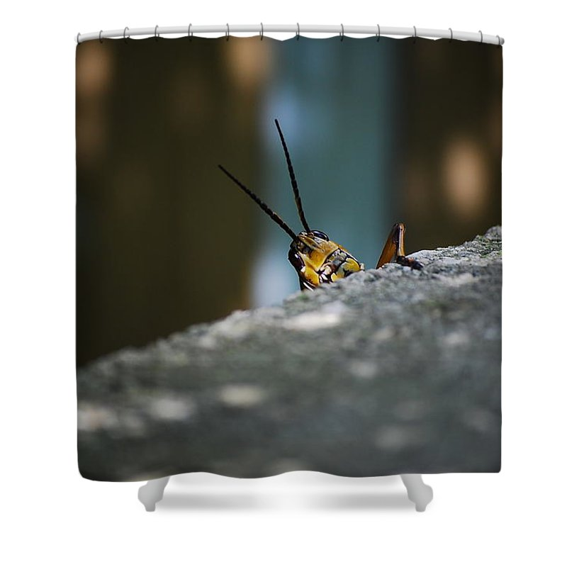 Bugs Shower Curtain featuring the photograph The Real Hopper by Robert Meanor