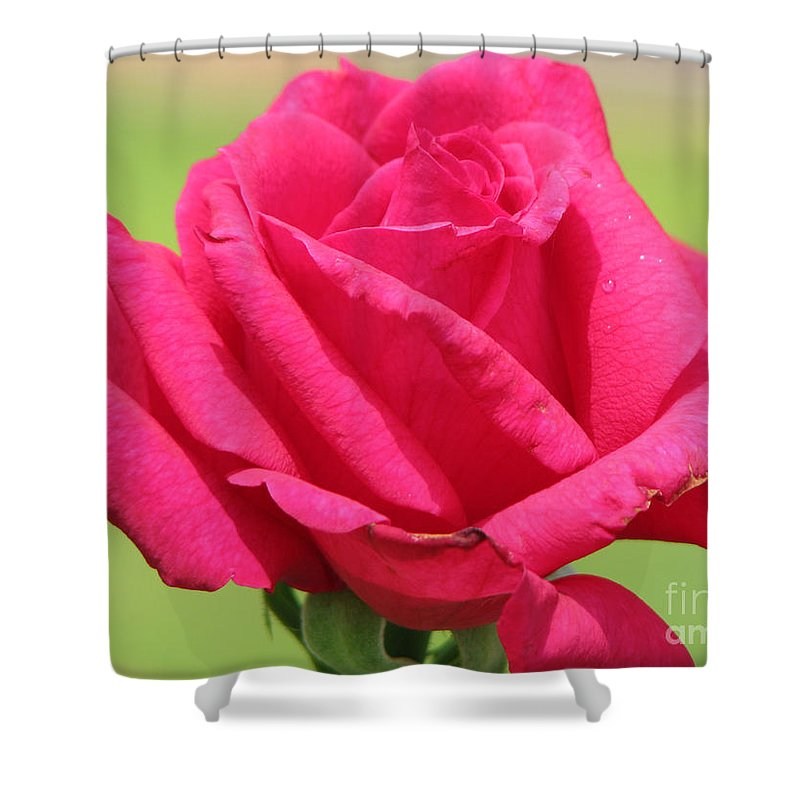 Roses Shower Curtain featuring the photograph The Rose by Amanda Barcon