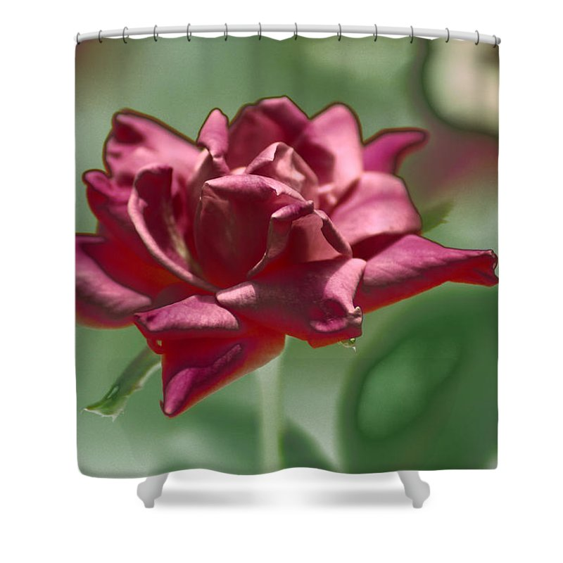 Flower Shower Curtain featuring the photograph The Rose by Donna Bentley