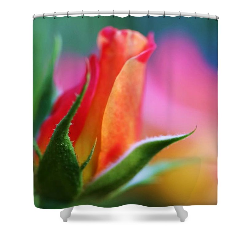 Rose Shower Curtain featuring the photograph The Rose by Mitch Cat