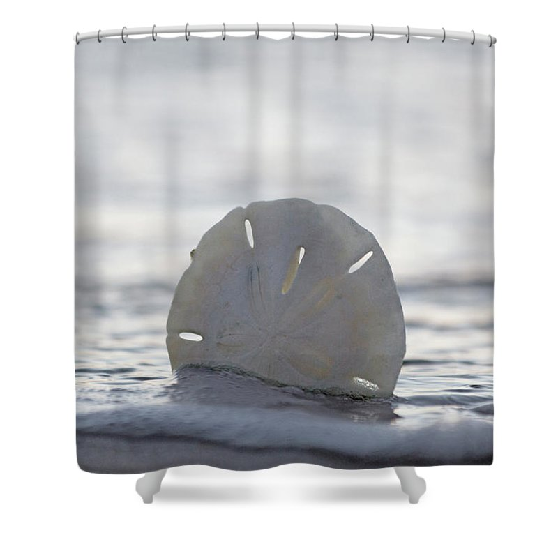 Sand Shower Curtain Featuring The Photograph The Sand Dollar By Betsy Knapp