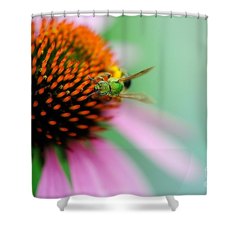 Bees Shower Curtain featuring the photograph The Seeker by Lois Bryan