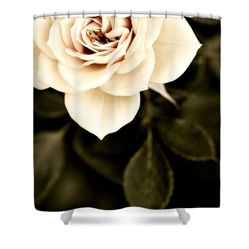 Rose Shower Curtain featuring the photograph The Softest Rose by Marilyn Hunt