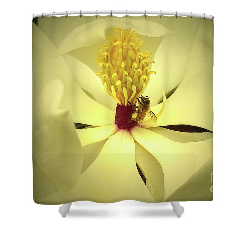 The Southern Magnolia Shower Curtain featuring the photograph The Southern Magnolia by Kim Pate
