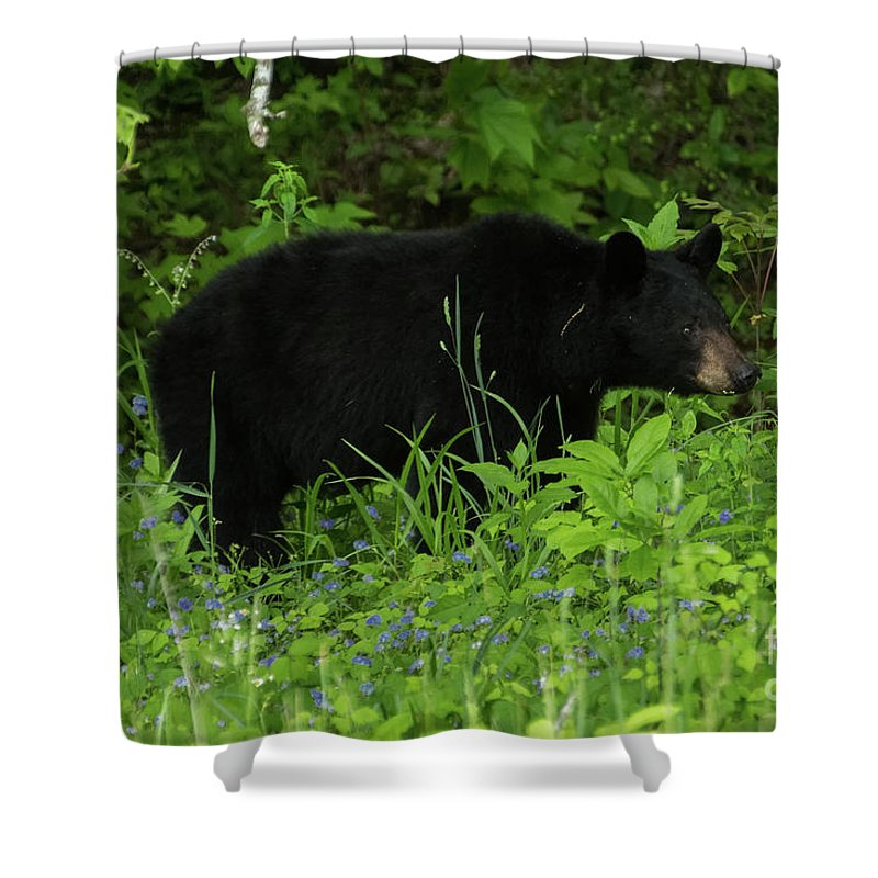Bear Shower Curtain featuring the photograph The Standoff by Jo Ann Gregg
