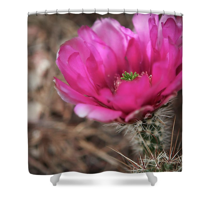 Cactus Shower Curtain featuring the photograph The Stigma Of Beauty II by Martina Schneeberg-Chrisien