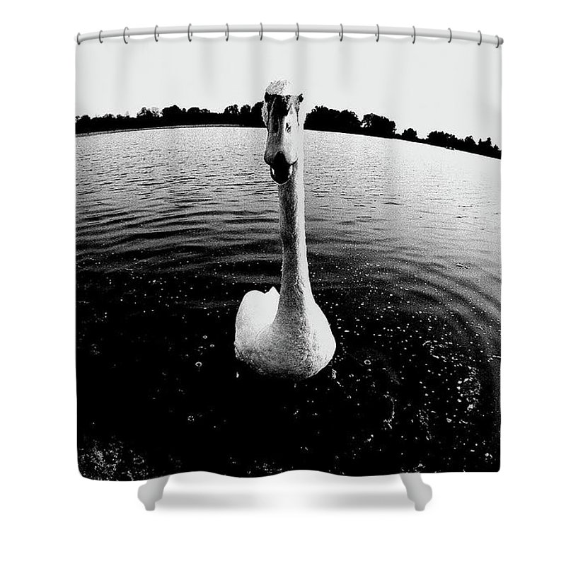Animals Shower Curtain featuring the photograph The Swan by Heinz Baade