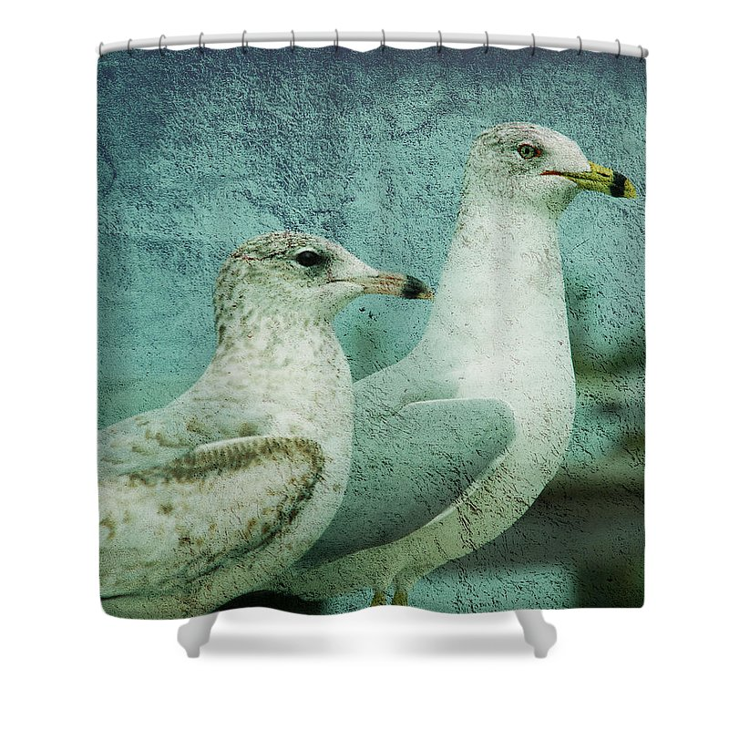 Seagulls Shower Curtain featuring the photograph The Two Guys by Susanne Van Hulst