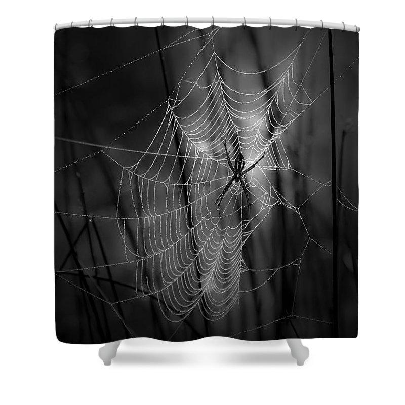 Spider Shower Curtains