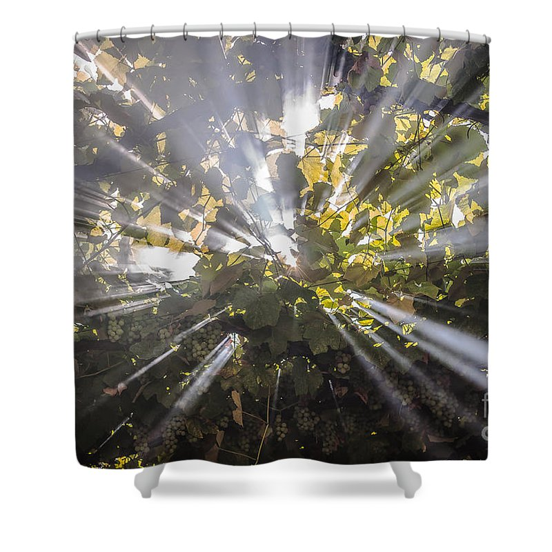 Landscape Shower Curtain featuring the photograph Therefrom by Lyudmila Prokopenko