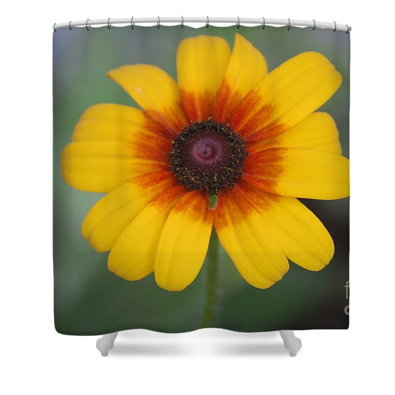 Landscape Shower Curtain featuring the photograph They Call Me Mellow Yellow. by David Lane
