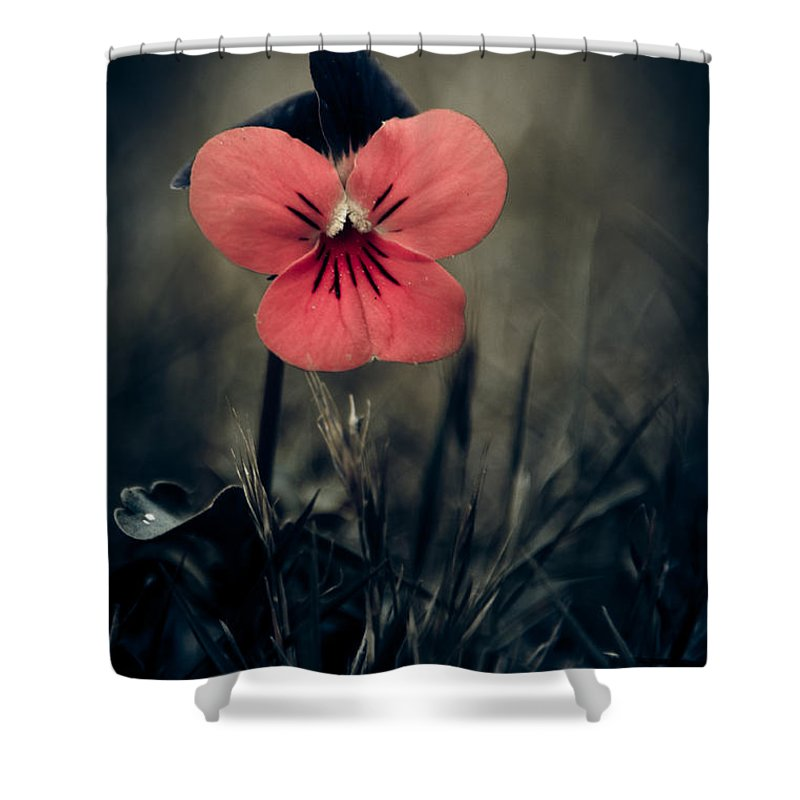 Red Pansy Shower Curtains | Fine Art America