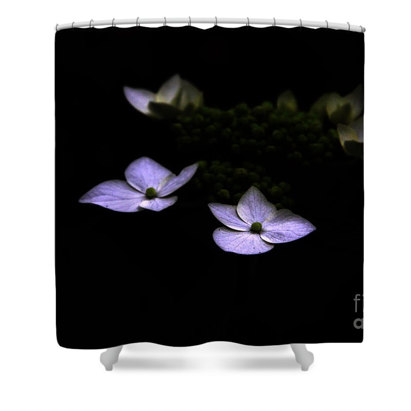 Hydrangea Shower Curtain featuring the photograph This Little Light Of Mine by Amanda Barcon
