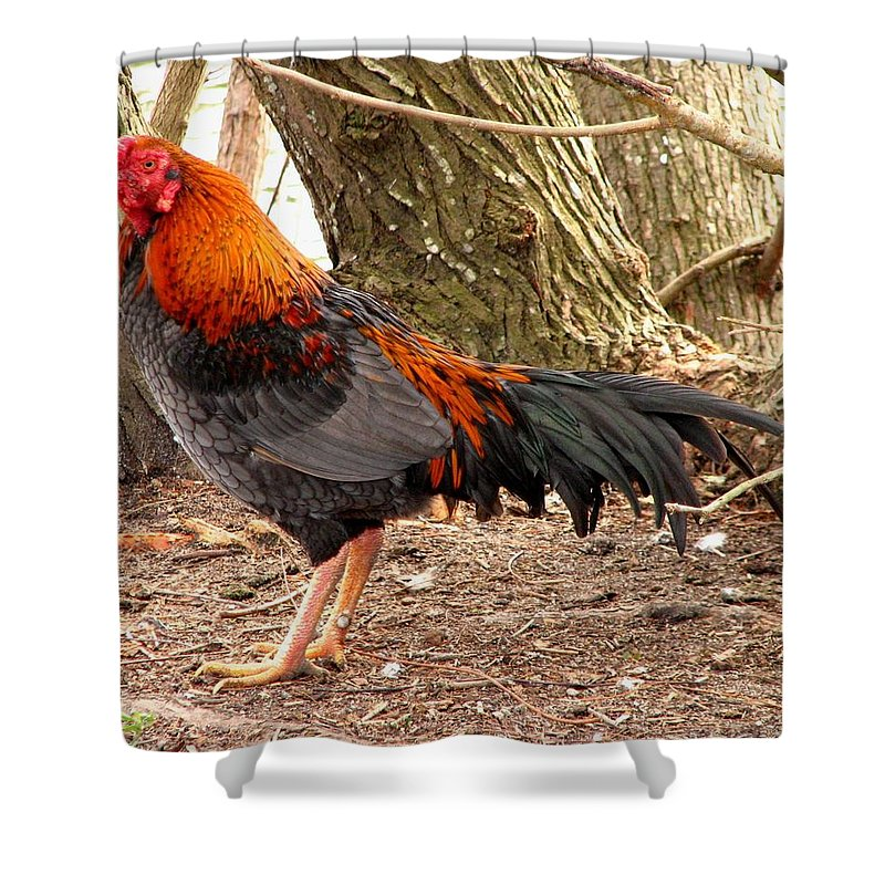 Chicken Shower Curtain featuring the photograph This One's Not For Dinner by J M Farris Photography