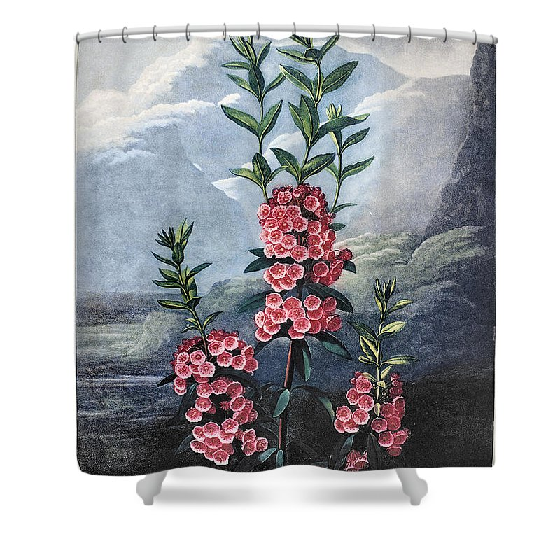 1804 Shower Curtain featuring the photograph Thornton: Kalmia by Granger