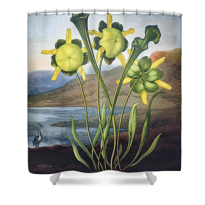 1803 Shower Curtain featuring the photograph Thornton: Pitcher Plant by Granger