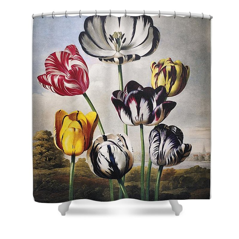1798 Shower Curtain featuring the photograph Thornton: Tulips by Granger