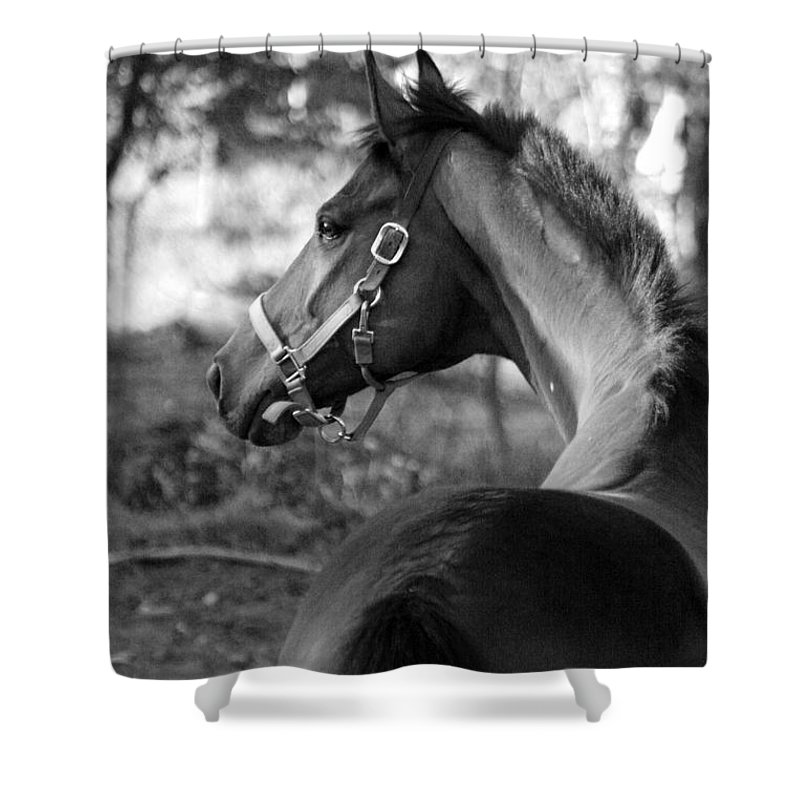 Thoroughbred Shower Curtain featuring the photograph Thoroughbred - Black And White by Angela Rath