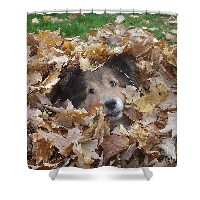 Dog Shower Curtain featuring the photograph Those Eyes by Shelley Jones