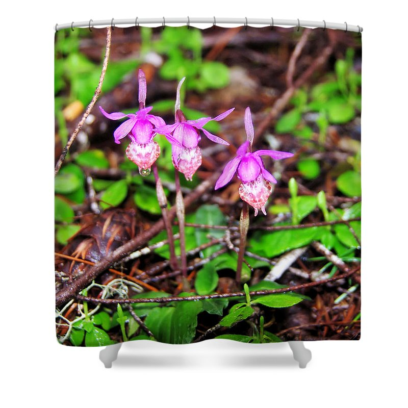 Flowers Shower Curtain featuring the photograph Three Amigos by Jeff Swan