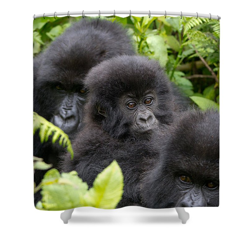 Africa Shower Curtain featuring the photograph Familia by Milton Cogheil
