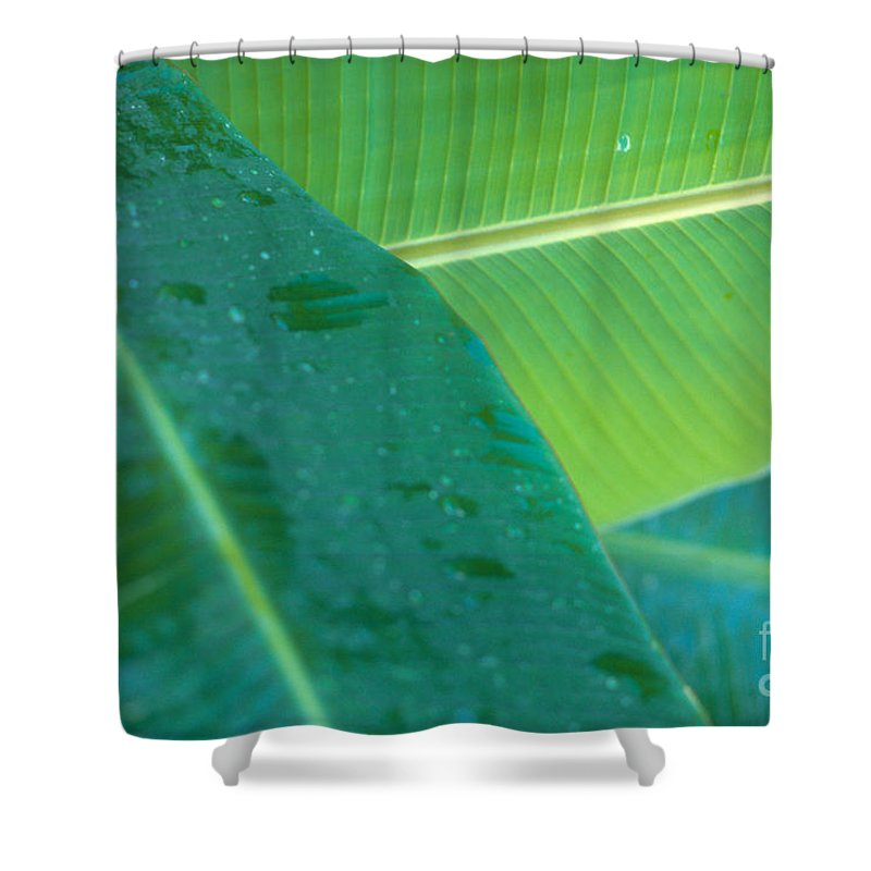 Agriculture Shower Curtain featuring the photograph Three Banana Leaves by Dana Edmunds - Printscapes