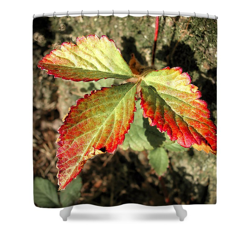 Forest Shower Curtain featuring the photograph Three Leaves by Todd A Blanchard
