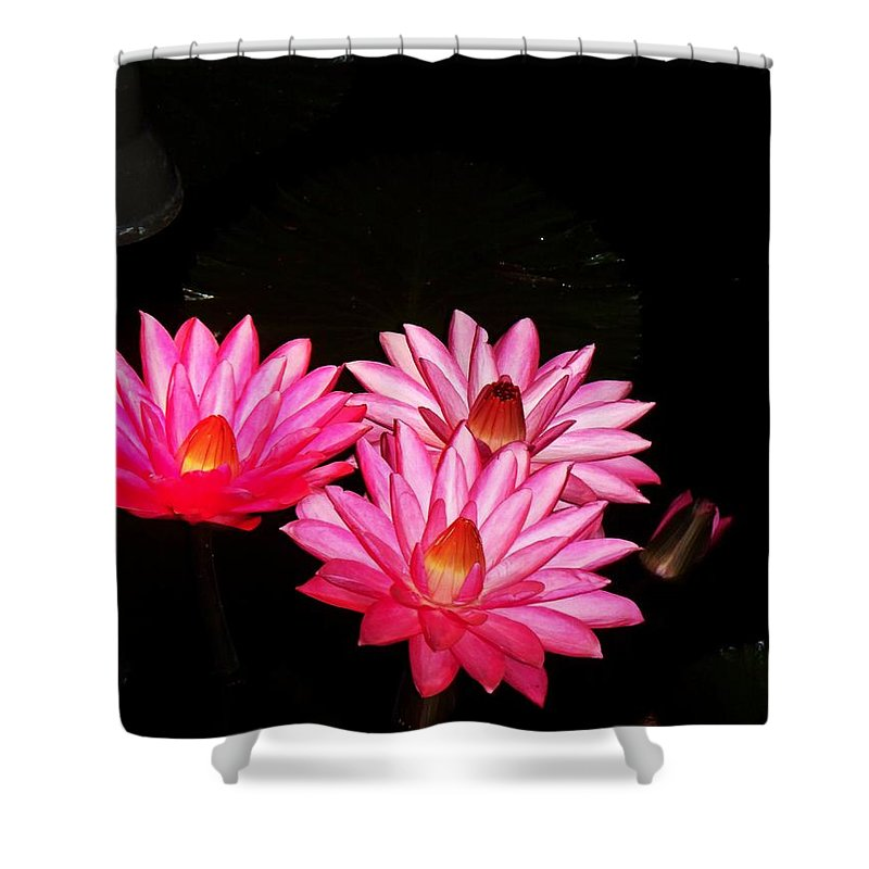 Photograph Shower Curtain featuring the photograph Three Night Lilies by Eric Schiabor