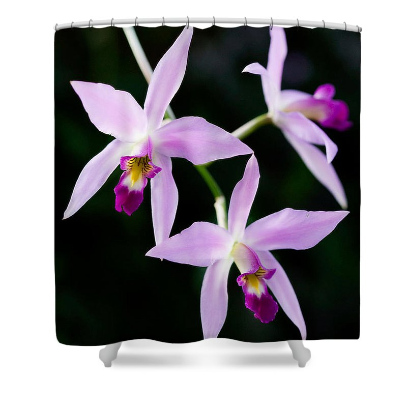 Orchid Shower Curtain featuring the photograph Three Orchids by Marilyn Hunt