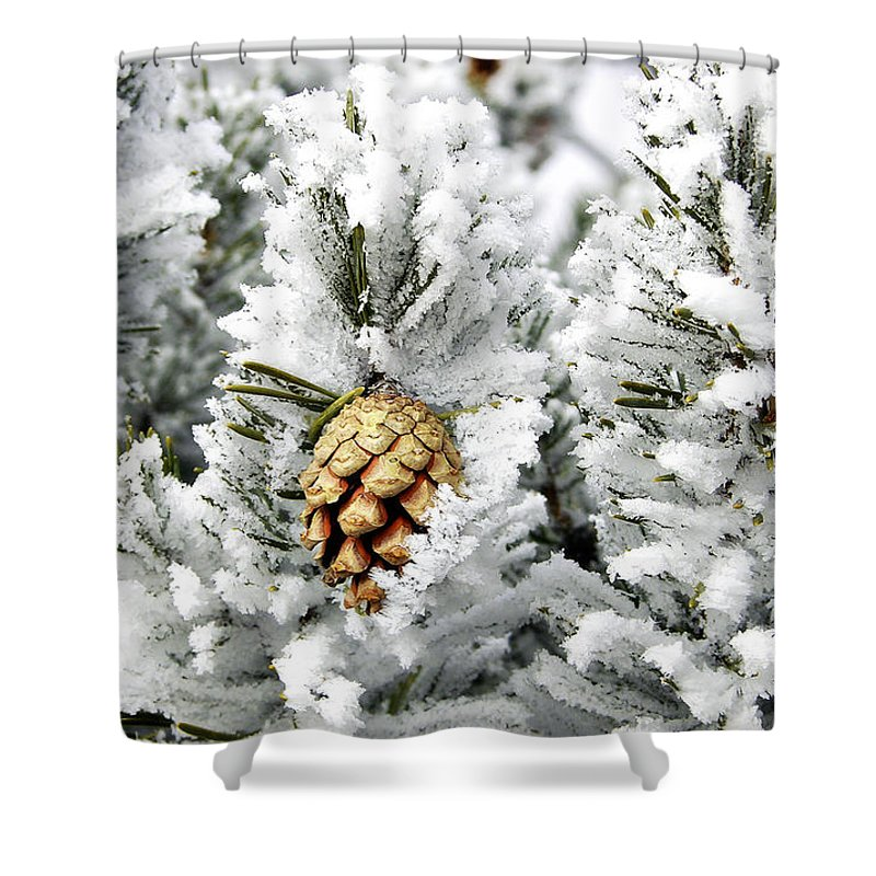 Frosty Shower Curtain featuring the photograph Three Pinecones by Marilyn Hunt
