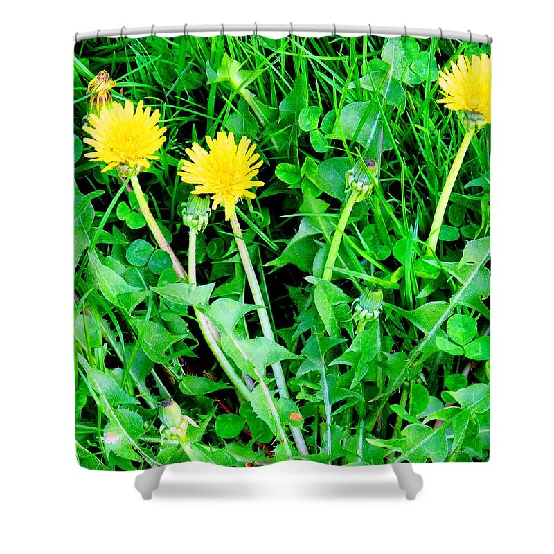 Dandylions Shower Curtain featuring the photograph Three Tenders by Ian MacDonald