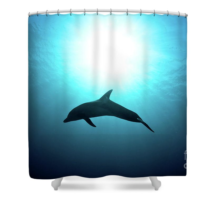Dolphin Shower Curtain featuring the photograph three year old Dolphin by Hagai Nativ