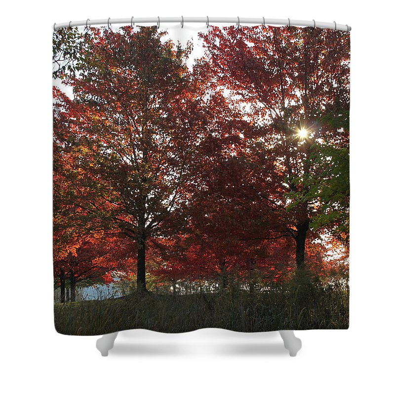 Fall Shower Curtain featuring the photograph Through The Leaves by Lauri Novak