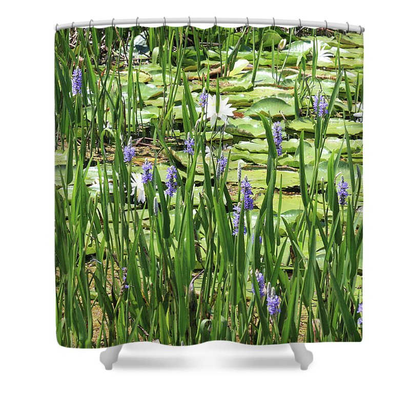 Lily Pond Shower Curtain featuring the photograph Through The Lily Pond by Carol Groenen