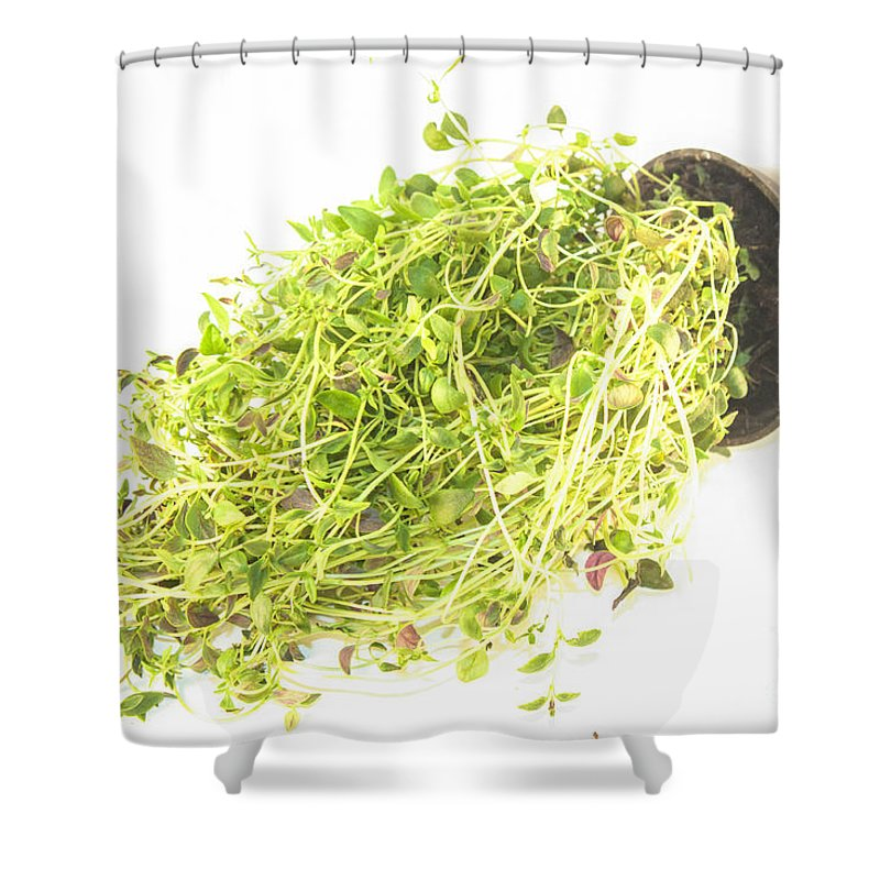 Thyme Shower Curtain featuring the photograph Thyme by D R