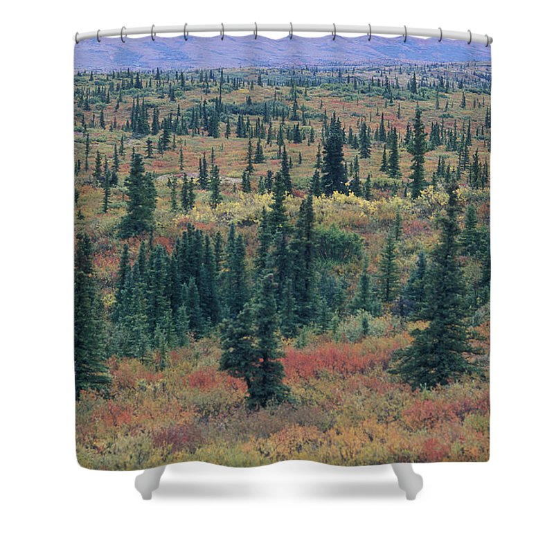 Tiaga Shower Curtain featuring the photograph Tiaga Fall Colors, Tundra And Spruce by Rich Reid